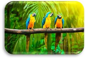 pappagalli c