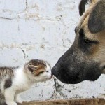 canile e gattile