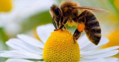 Giornata Mondiale delle api per celebrare l'importanza della vita