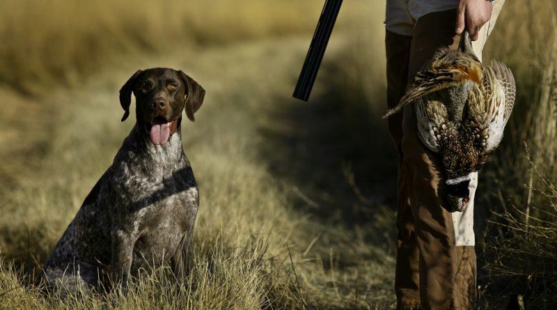 Stagione venatoria lombarda: sono oltre 53mila i cacciatori