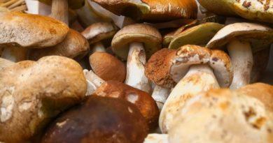 Varese: pioggia e funghi