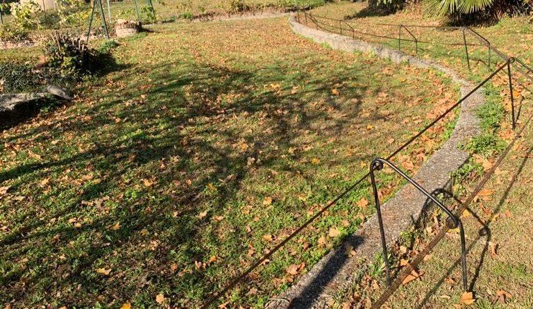 Cinghiali a Varese: le contromisure
