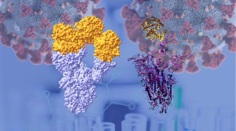 All'Insubria si produce la Spike che ricopre il Coronavirus